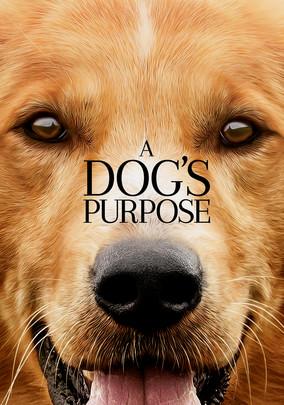 Dog S Purpose Redbox